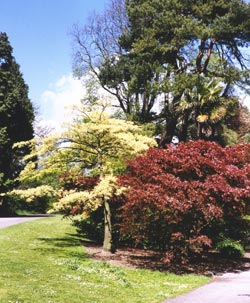 Westonbirt National Arboretum (copyright David Hockley)